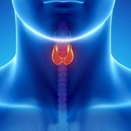 Эндокринная система (гормональный фон)