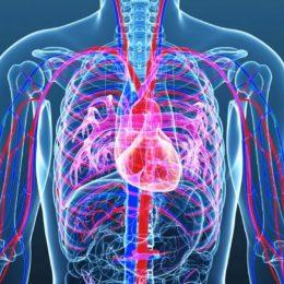 Система кроветворения