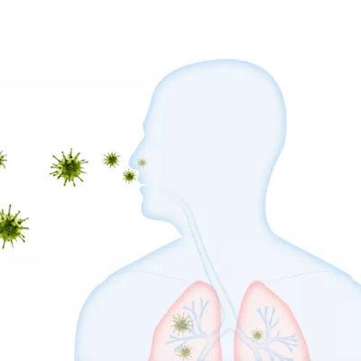 Revilab ML05+ПК-12 — здоровье дыхательной системы